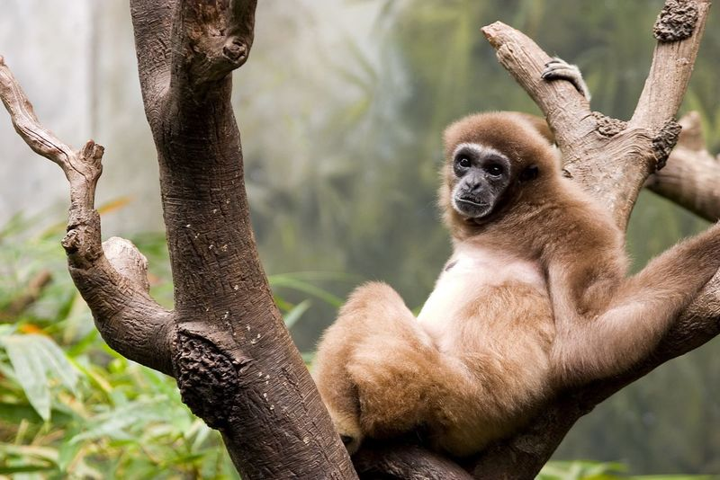 Animal Animal Themes Animal Wildlife Animals In The Wild Branch Day Focus On Foreground Looking Looking Away Mammal Monkey Nature No People One Animal Outdoors Plant Primate Sitting Tree Vertebrate