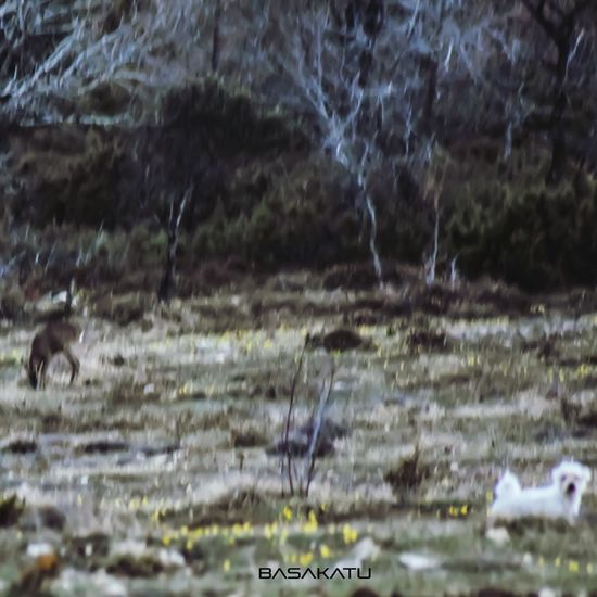 ¿Os conocéis de antes? Dog Corzo Perro Friend Friends Forest Mountain Naturaleza Nature Photography Animallove Perros  Campo Jugar Wildlife Wildlife & Nature Roedeer Capreolus Capreolus Nature Paisaje Motion Close-up Grass EyeEmNewHere
