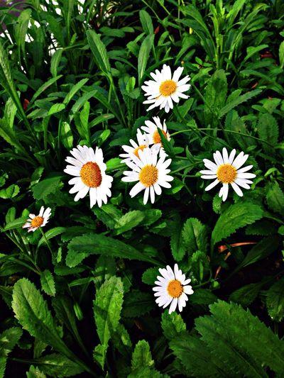 Flowers frô