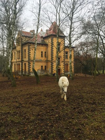 Building Exterior Architecture Built Structure Animal Themes Domestic Animals Tree Nature Sheep Standing One Animal No People House Mammal Autumn Residential Building Day Outdoors Donkey Scary Scary Places Creepy Creepy House Horse Empty