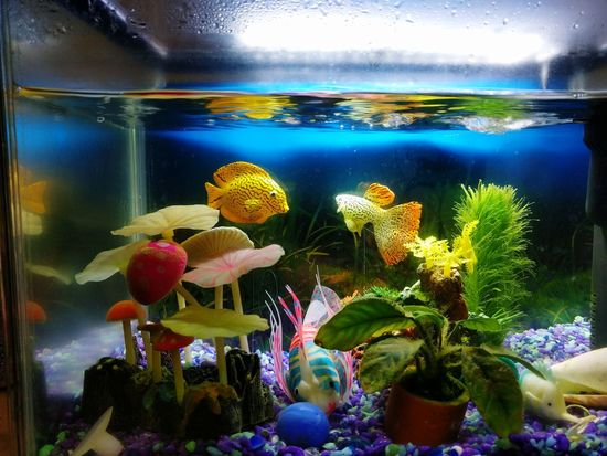 Underwater Aquarium Variation Indoors  Water No People Animal Themes Multi Colored Mobile Photography