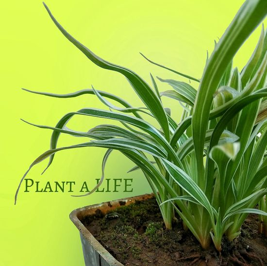 Plant Green Color Text Nature Communication No People Agriculture Day Close-up Naturelover Growth Plant Plant Lover Life Lifeisbeautiful Life Quotes Life's Simple Pleasures... Lifeporn Life In Color Life And Death Independence India Plantlife Green Leaves Awareness