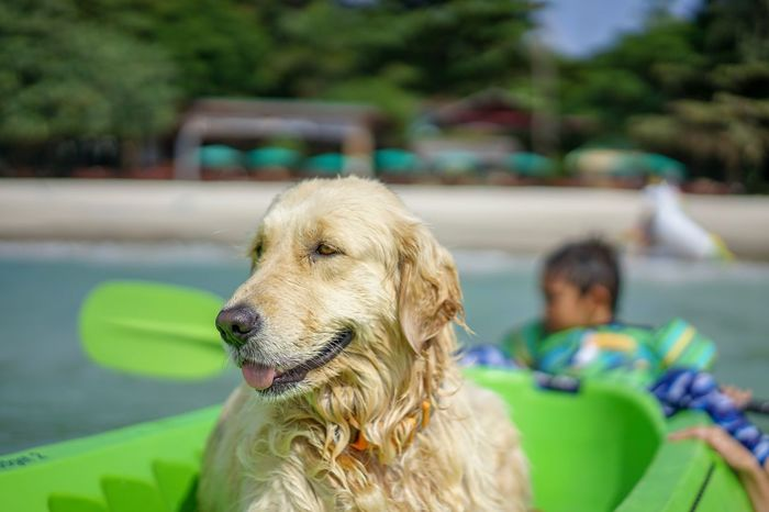 Sea cruise with little children Dog Canine One Animal Pets Domestic Domestic Animals Mammal Child Childhood Retriever Focus On Foreground Golden Retriever People Portrait Boys Offspring Pet Owner Vertebrate