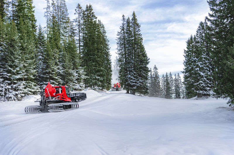 Winter scenery with two red snow groomer vehicles going through snowy road and green fir forest, in the Alps mountains, in Ehrwald, Austria. Austrian Alps Evergreen Tree Winter Landscape Blue Sky Cold Temperature Land Vehicle Mode Of Transportation Nature Non-urban Scene Outdoors Road Sky Snow Snow Covered Snow Groomer Snowcat Snowy Trees Tracked Vehicle Transportation Travel Destinations Tree Winter