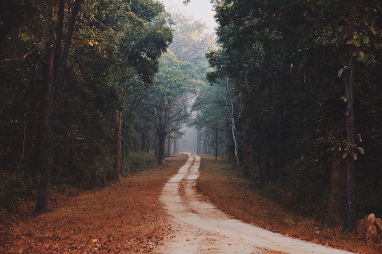 Way in the wild Nature Forest