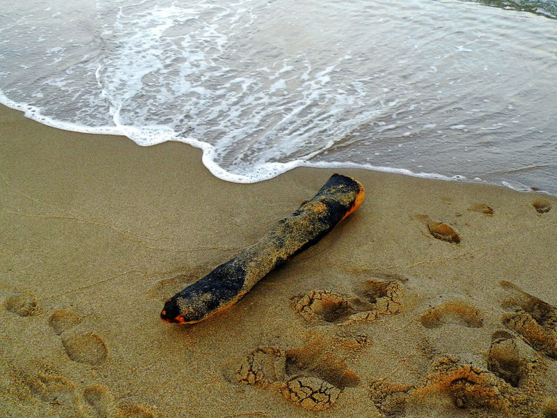 Beach Flotsam & Jetsam High Angle View Mediterranean Sea Outdoors Sand Stranded Wave Wood