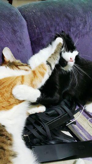 Things I Like Catoftheday Catsofinstagram Cats Cat♡ Likeforlike #likemyphoto #qlikemyphotos #like4like #likemypic #likeback #ilikeback #10likes #50likes #100likes 20likes Likere [ Follow #f4f #followme #TagsForLikes #TFLers #followforfollow #follow4follow Teamfollowback Followher Followbackteam Followh [a: Cute