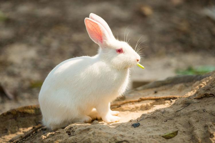 Rabbit eating food on rock