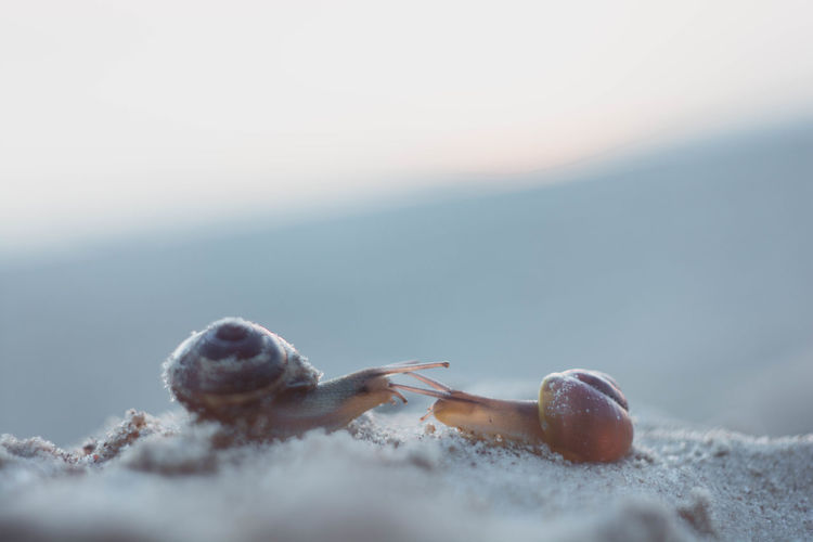 Come closer pleas I can't see you Animal Themes Animal Wildlife Animals In The Wild Beach Beauty In Nature Close-up Day Hermit Crab Nature No People One Animal Outdoors Sand Sea Life Selective Focus