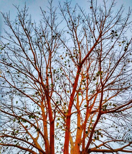 Tree Nature Sky Sunlight Beauty In Nature Sunset Day First Eyeem Photo