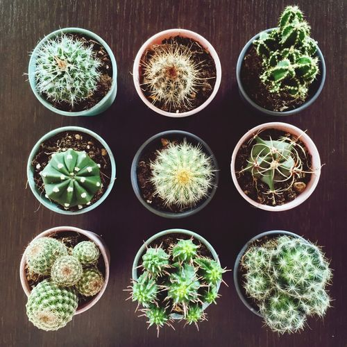 Ikea is always a good idea 🌵 IKEA Succulent Plant Potted Plant Cactus Plant No People Growth In A Row Nature Green Color Flower Pot Indoors  First Eyeem Photo Plant