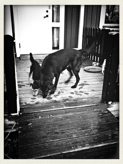 My Dog Bebis <3