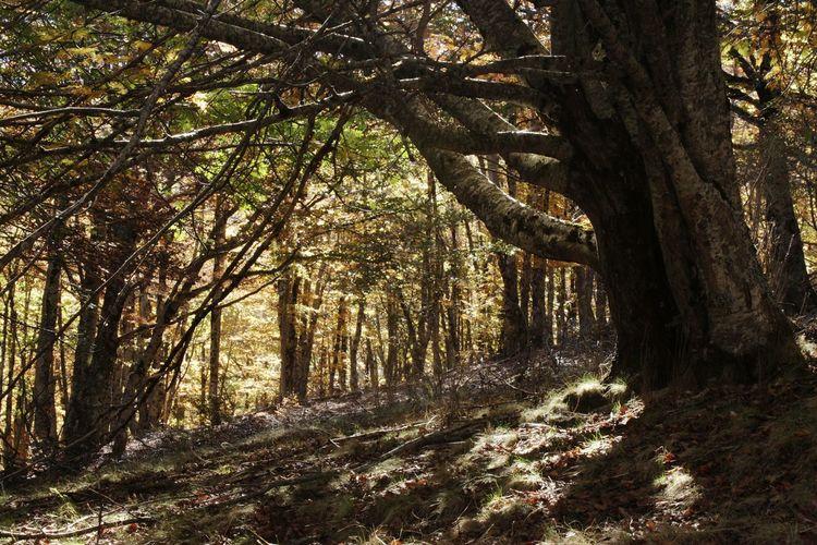 Tree Tranquility Otoño Guadalajara Senderismo Naturaleza Tejera Negra