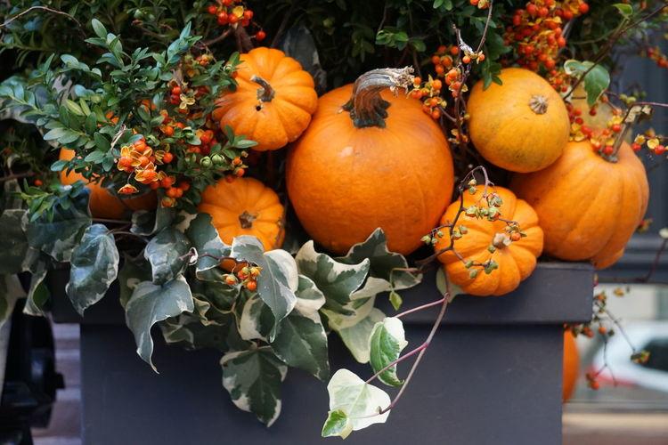 Close-up of pumpkins against plant
