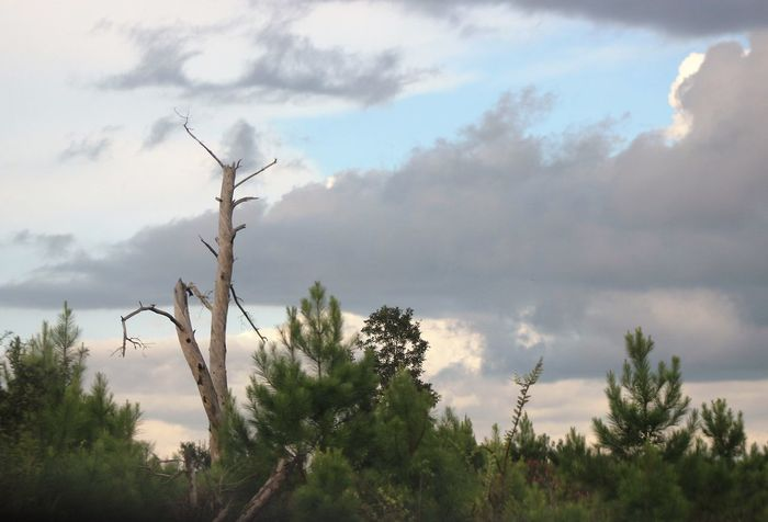 Beauty In Nature Cloud Cloud - Sky Countryside Deadtree Dramatic Sky Eye4photography  Eyem Nature Lovers  Eyemphotos Nature Outdoors Popular Photos Scenics Sky Storm Cloud Tranquil Scene Tranquility Tree Trees