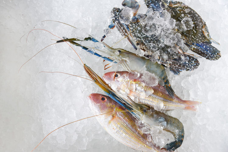 High angle view of dead fish on snow