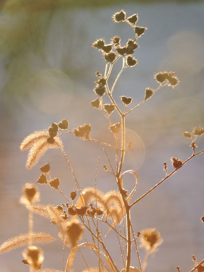 Backlit Sunset Beauty In Nature Branch Close-up Day Flower Fragility Freshness Golden Hours Growth Nature No People Outdoors Plant Sky Sunlit Glow Tree