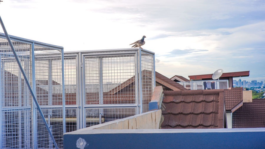 Low angle view of seagull perching on building against sky