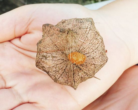 Person Holding Unrecognizable Person Close-up Leaf Part Of Lifestyles Human Finger Dead Personal Perspective Focus On Foreground Nature Fragility