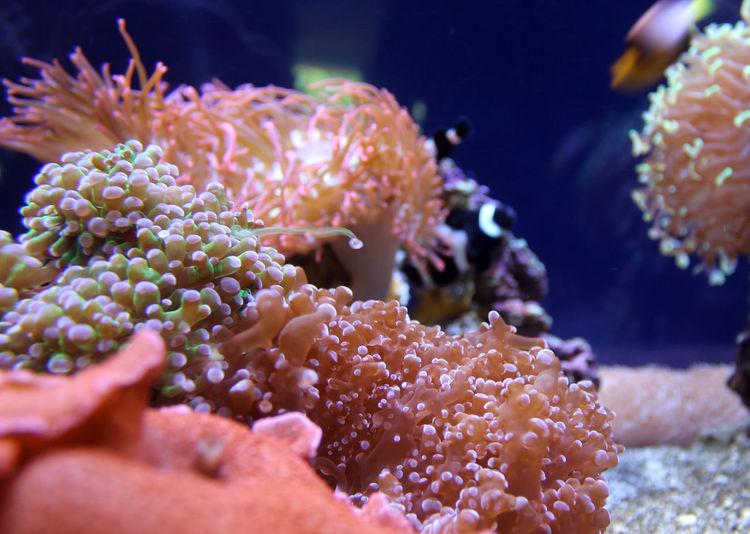 Sea Life Animal Themes