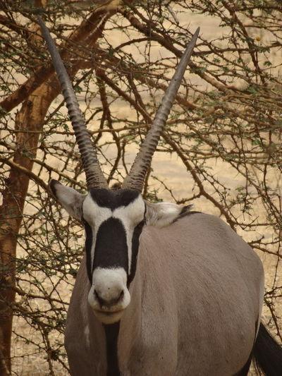 Bandia reserve African Safari Animal Themes Animals In The Wild Bandia Reserve Day Mammal Nature No People One Animal Outdoors Portrait Safari Tree