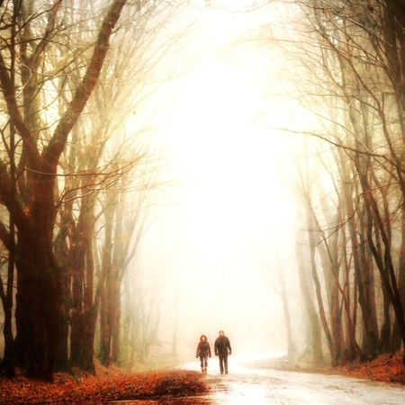 Full Length Two People Domestic Animals Real People Leisure Activity Beauty In Nature Fog Foggy Mist Tranquility Nature Outdoors Tree Forest Landscape Beauty In Nature