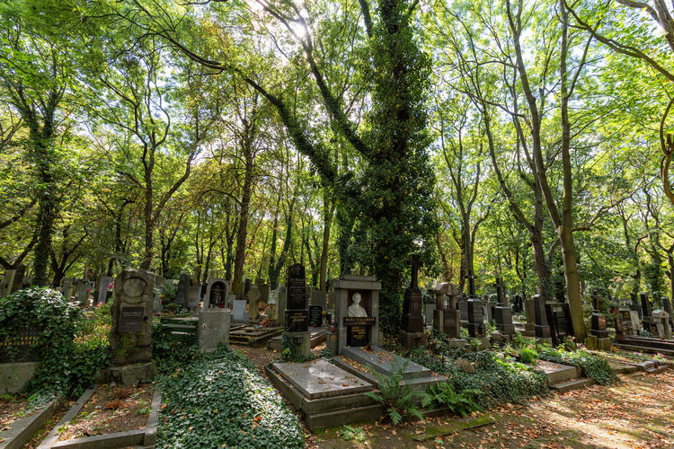 View of cemetery in forest