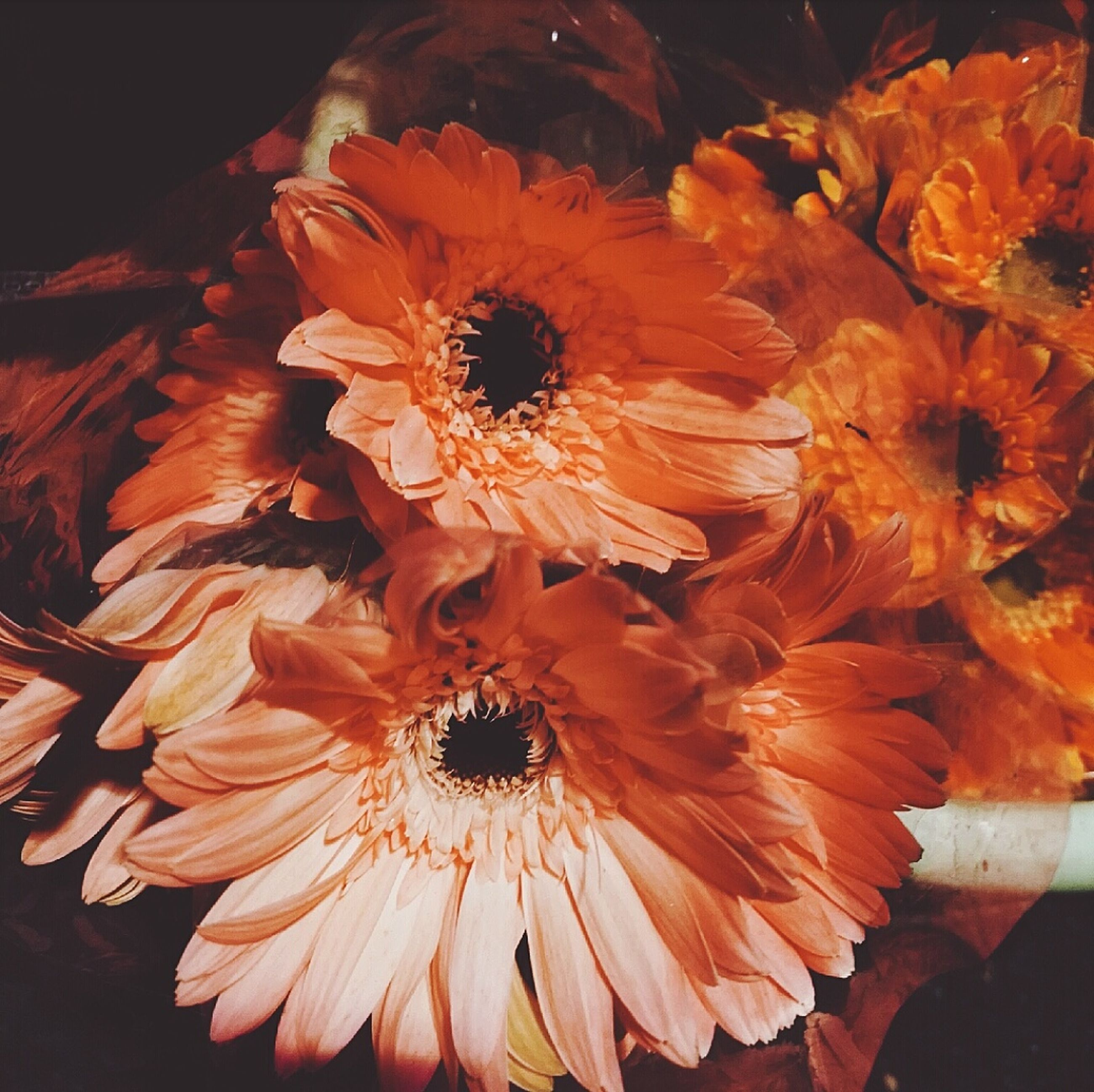 flower, fragility, beauty in nature, orange color, petal, nature, freshness, flower head, no people, pollen, close-up, outdoors, day, gerbera daisy