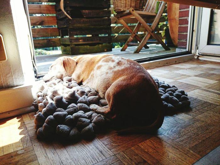 Dogslife Dogphoto Dogs Life Dogmodel Doglovers Hund