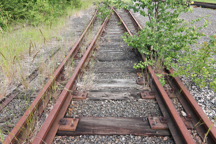 High angle view of railroad tracks amidst plants