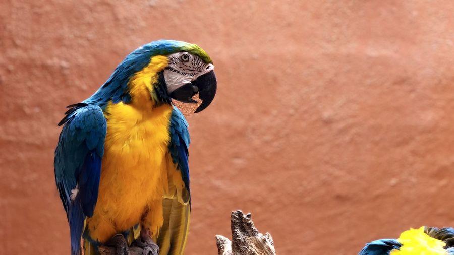 Close-up of a bird ara papagai