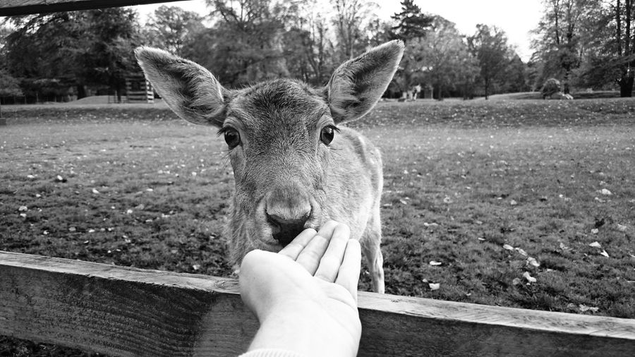 Cropped hand reaching towards deer at zoo