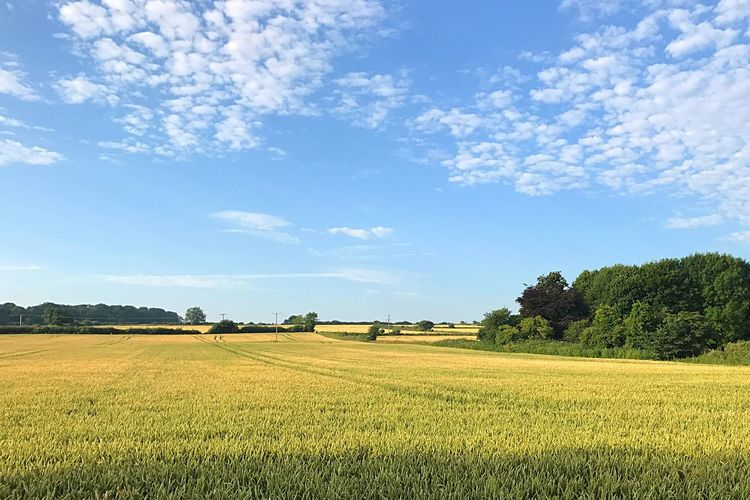 Agriculture Field Sky Cloud - Sky Rural Scene Beauty In Nature Growth Nature Tranquil Scene Day Tree Landscape Tranquility No People Blue Scenics Outdoors