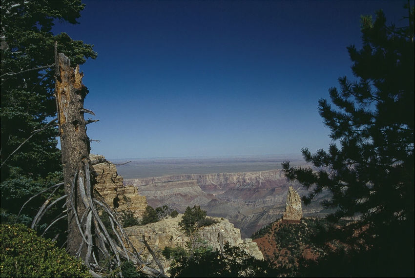 Grand Canyon: View from North Rim (1993) 1993 Analogue Photography Beauty In Nature Blue Clear Sky Day Growth Horizon Over Land Landscape Mountain Nature No People Outdoors Remote Rural Scene Scenics Solitude Tourism Tranquil Scene Travel Destinations Tree Vacations Valley Wide Wide Shot