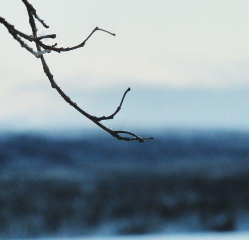 Eyeemphotography EyeEm Gallery Russia Interesting EyeEm Best Shots Nice Tree Beautiful Winter Beautiful Landscape Russian Nature Murmansk Love ♥ EyeEm Best Shots - Landscape Macro EyeEm Best Shots - Nature Nature Canon Macro Photography