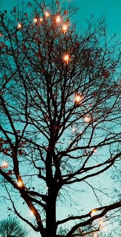 Tree Low Angle View Nature Branch Sky Outdoors Scenics Clear Sky EyeEm Nature Photography EyeEm Nature Lover Nature Photography EyeEm Gallery Naturelovers Eyeemphotography Germany 🇩🇪 Deutschland Billerbeck Lights And Shadows Lights In The Dark