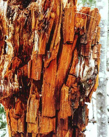 TreePorn Tree Tree Bark Treelovers Treeart