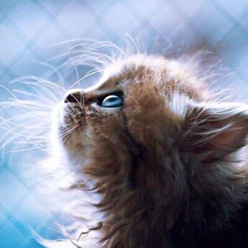 رمزياتي رمزيات  رمزيات_منوعه صور_رمزية صور رمزياتBBM First Eyeem Photo Photo Photo♡ Cat