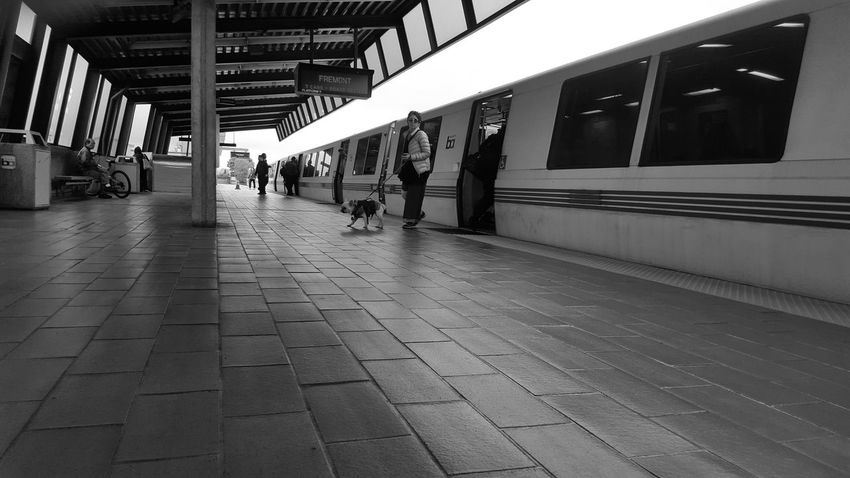 Train Station Trainphotography BART Bart Station Blackandwhite Blavk And White Woman With Dog