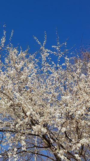 in blooming ❤