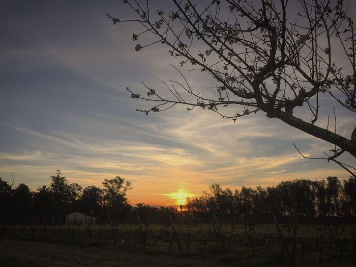 Sunset Enjoying