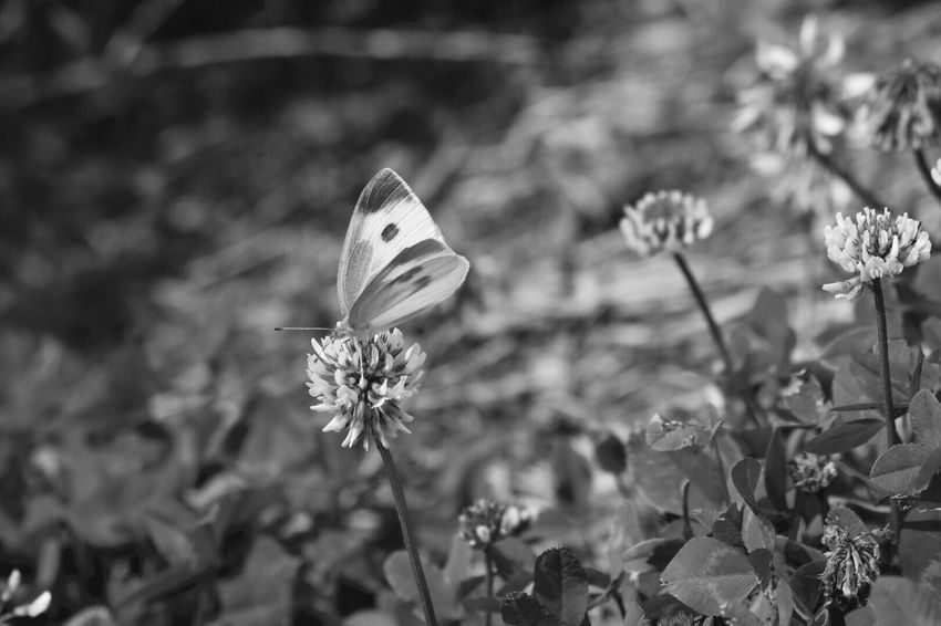 Flower Fragility Insect Growth Nature Plant Petal Butterfly - Insect No People Freshness Flower Head Focus On Foreground Outdoors Beauty In Nature One Animal Animals In The Wild Animal Themes Butterfly Day Close-up
