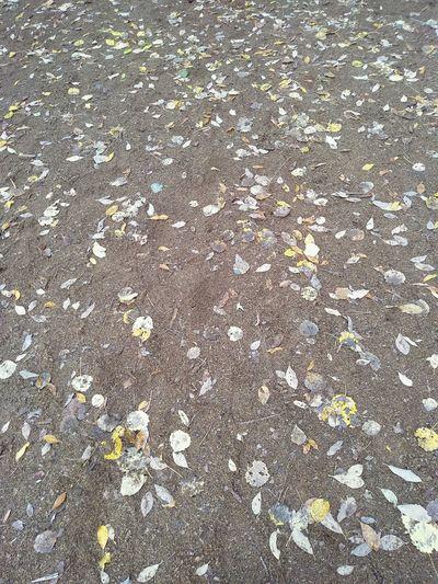 Листья отдых природнаякрасота природароссии Природа красота путешествие Travel неожиданность удивительноерядом карелия листья желтыелистья Backgrounds Full Frame High Angle View Pattern Textured  Close-up