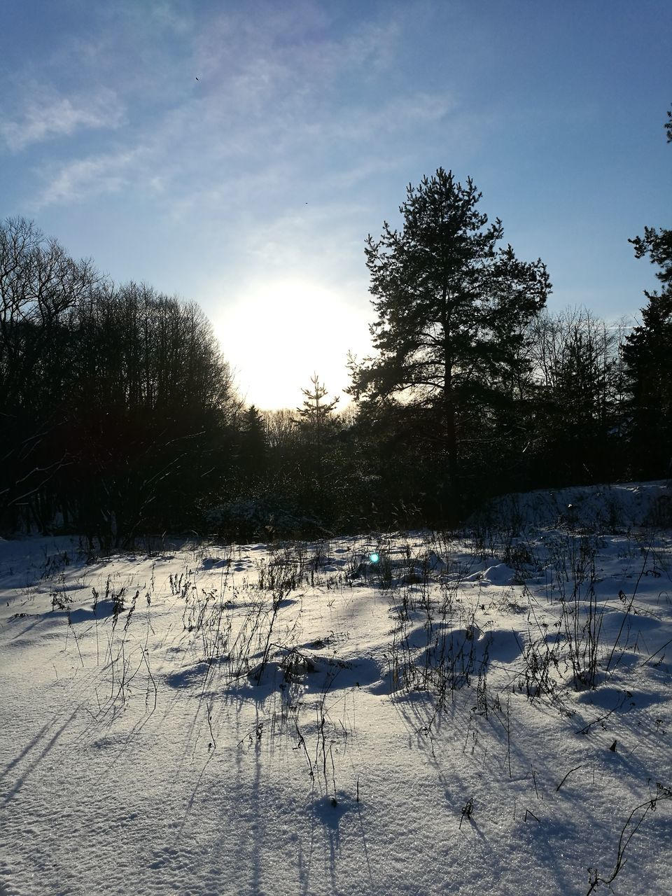 winter, snow, cold temperature, tree, nature, weather, sunlight, tranquility, scenics, no people, outdoors, tranquil scene, landscape, field, beauty in nature, sun, day, frozen, sky