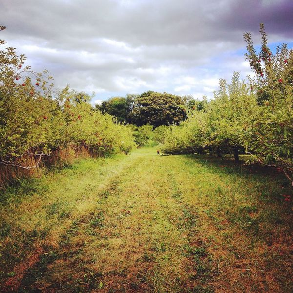 Maryland Scenery Appletrees Farmlandscape Mothernature Nature Autumn Openfield Perspective