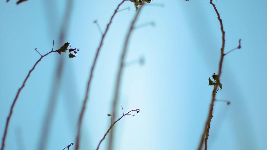 Blue Sky Botany