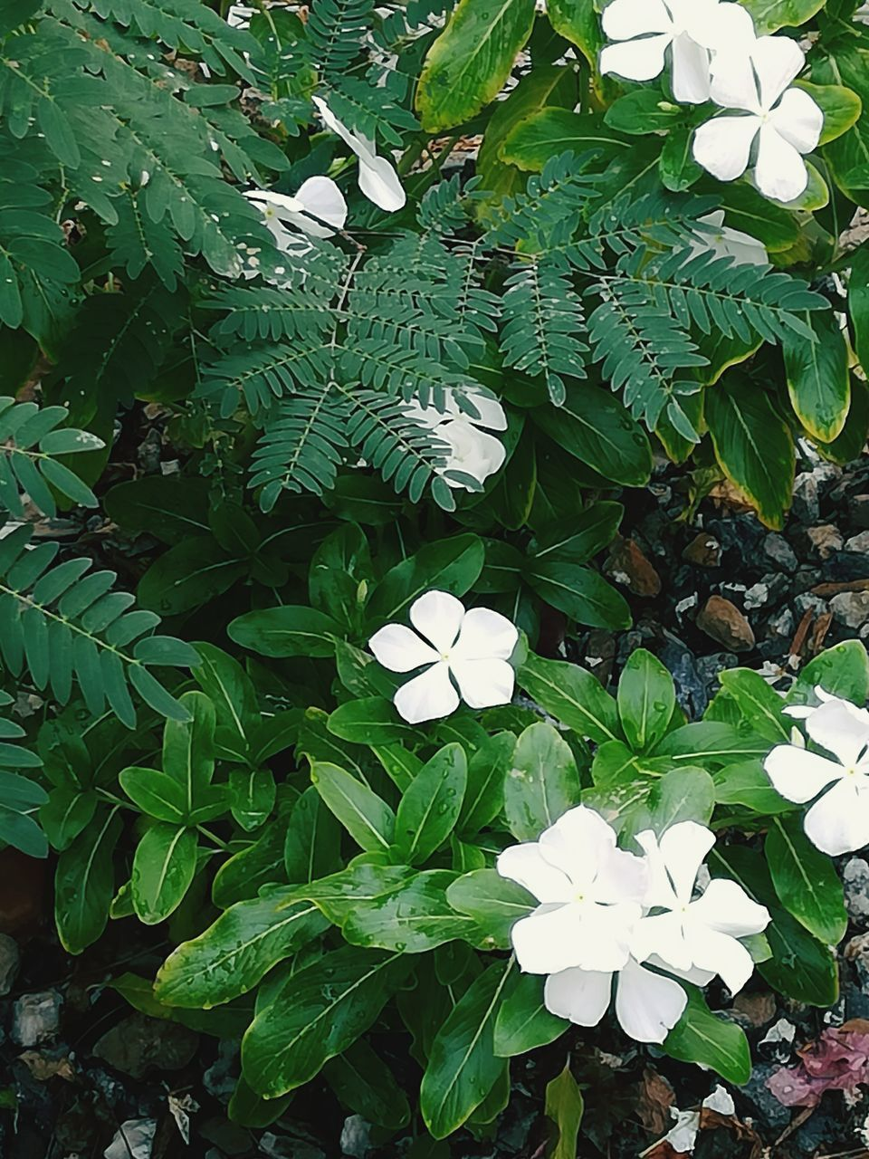 plant, growth, beauty in nature, leaf, plant part, freshness, white color, green color, flower, flowering plant, nature, petal, inflorescence, flower head, fragility, high angle view, vulnerability, day, no people, close-up, outdoors