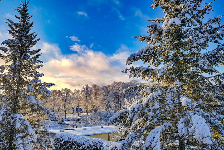Winter is here Sky Cloud - Sky Nature No People Tree Beauty In Nature Day Outdoors Scenics Winter Snow Cold Temperature EyeEm EyeEm Nature Lover