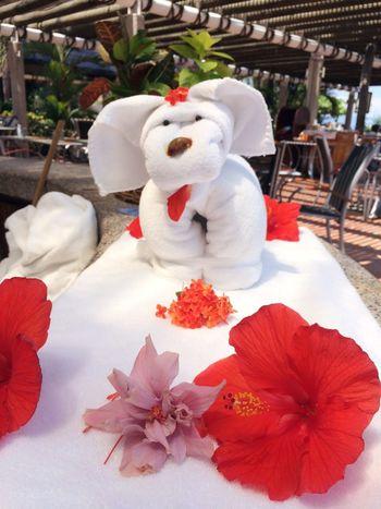 Towel Animal Swimming Pool Dog Art