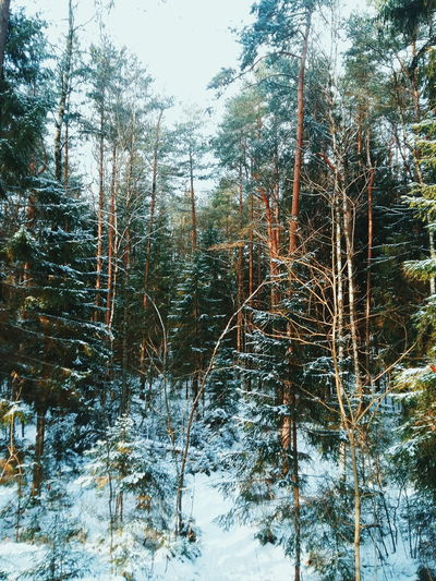 Tree Nature Winter Growth No People Beauty In Nature Tranquility Scenics Sky Cold Temperature Outdoors Day Snow Eyem Best Shots Hello World Smolensk Eyemphotography EyeEm Best Shots - Nature Eyem Collection VSCO Eyeemphoto Tranquil Scene Forest Water Close-up